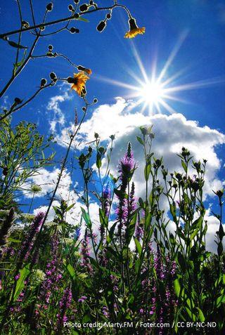 Vermont-wildflowers_l