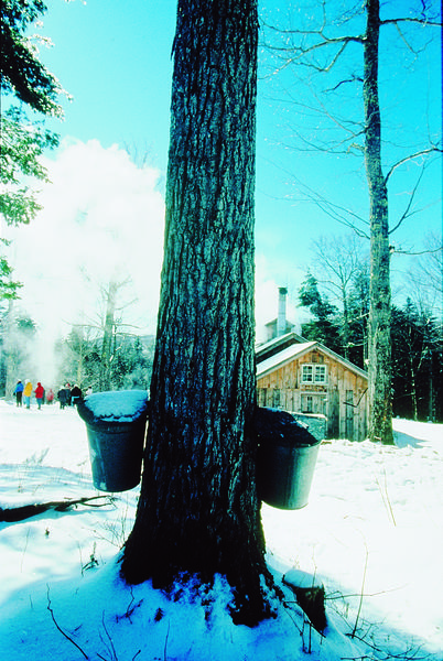 Green Mountain Inn - Sap Buckets