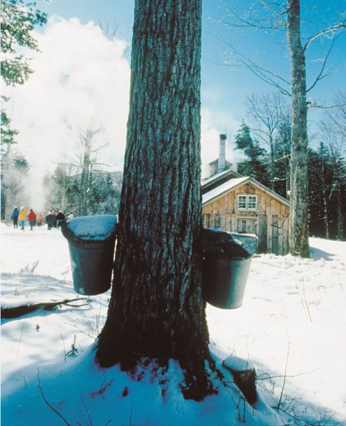 Vermont-maple-sugar-makers